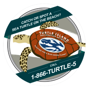 sea turtle sticker1-01
